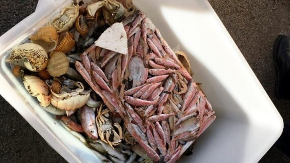 pesce sequestrato a Torre Santa Susanna (3)-2