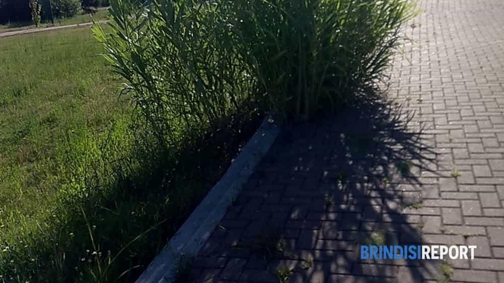 Il parco del Cillarese di Brindisi-2