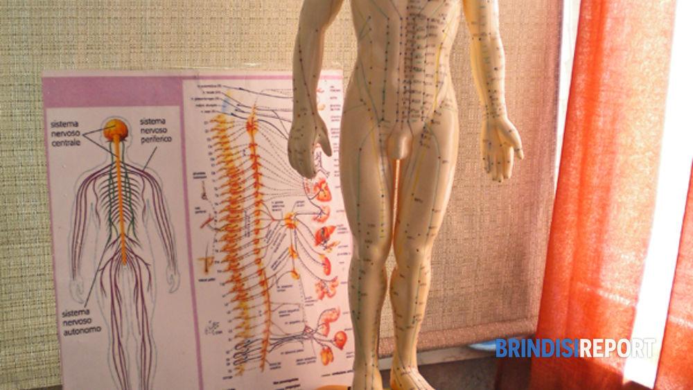 Una riproduzione del corpo umano
