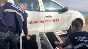 guardia costiera - ricci di mare sequestrati-2