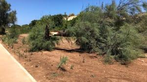 albero spezzato san gennaro-2