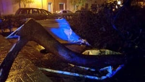 caduta ramo tre feriti villa comunale san vito-3