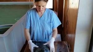 veterinari asl tartaruga-3