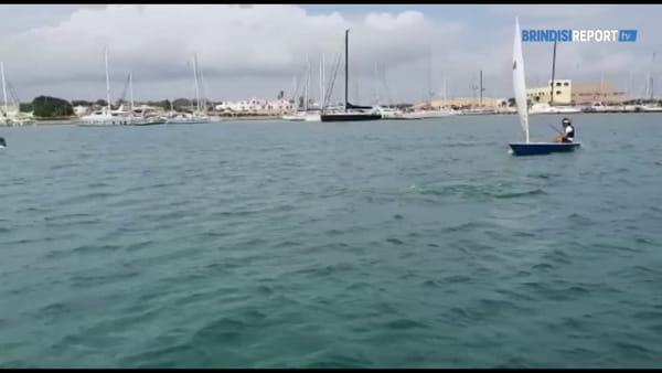 Scuola vela con i delfini, l'incontro nel porticciolo di Brindisi