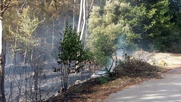 Incendio eucalipti Ostuni 3 (2)-2