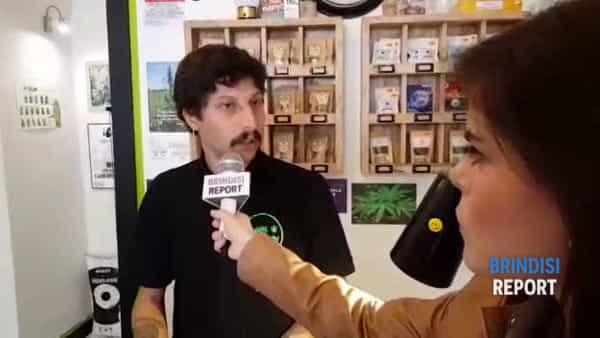 """Guerra di Salvini ai negozi di cannabis light: """"E' una caccia alle streghe"""""""
