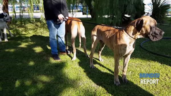 Duecento cani da tutto il Salento alla rassegna cinofila Elite Show