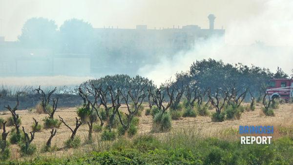 Bruciano anche alberi e macchia