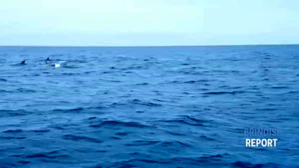 L'emozionante incontro con i delfini al largo delle coste brindisine