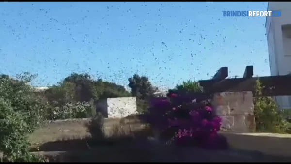 Lo spettacolo degli storni in volo nei cieli della periferia di Ostuni