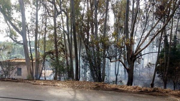 Incendio eucalipti Ostuni 3-3
