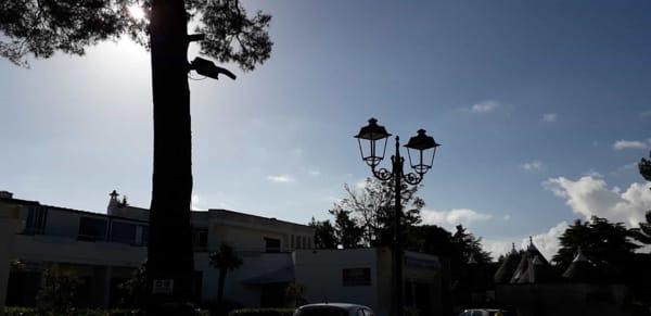 lampioni pro selva-2