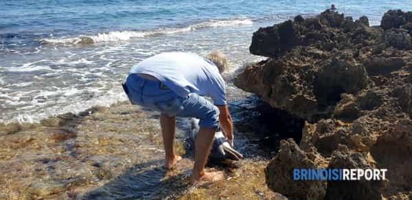 delfino spiaggiato villanova1