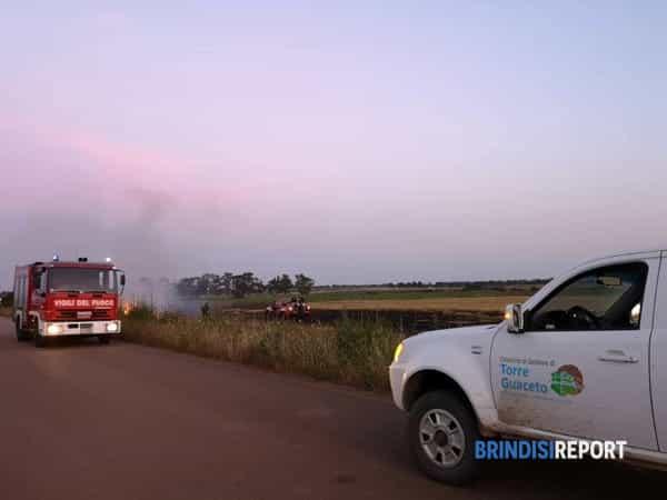 Incendio zona agricola Torre Guaceto-2