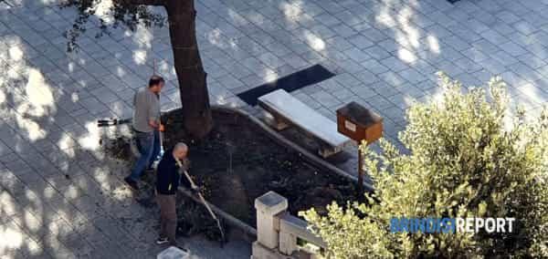 piazza cairoli pulizie commercianti-2