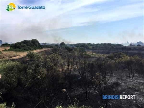 Incendio Torre Guaceto 26 06 2019 2-2