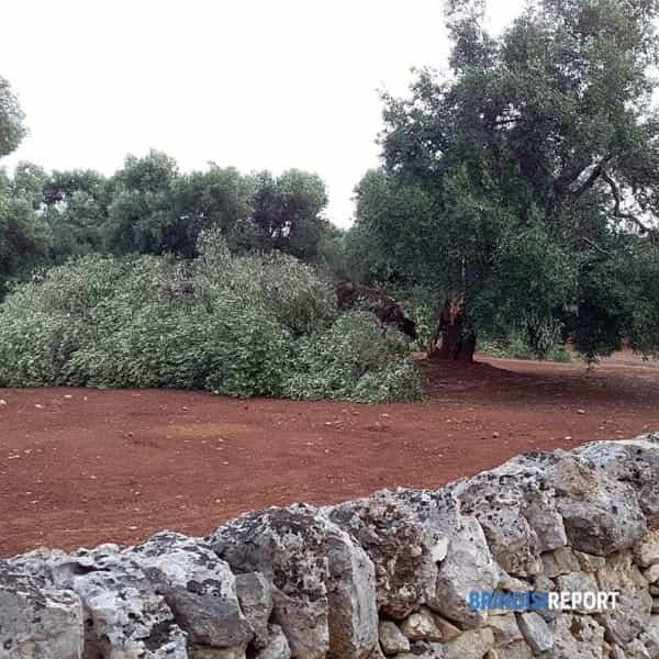 danni agricoltura tempesta 10 luglio 2019 (1)-2