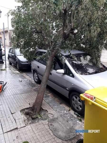 tempesta 11-12 novembre 2019 - albero su auto Francavilla Via pisacane-2