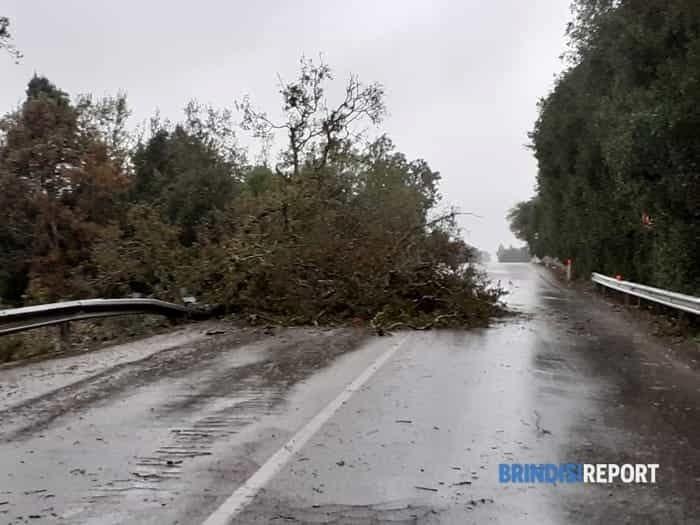 tempesta 11-12 novembre 2019 - albero caduto sulla ceglie-ostuni-2